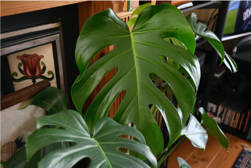The House Plant Guide